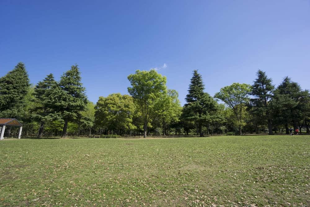 ナイキボーイ・ナイキガールが気になる代々木公園でのランニング