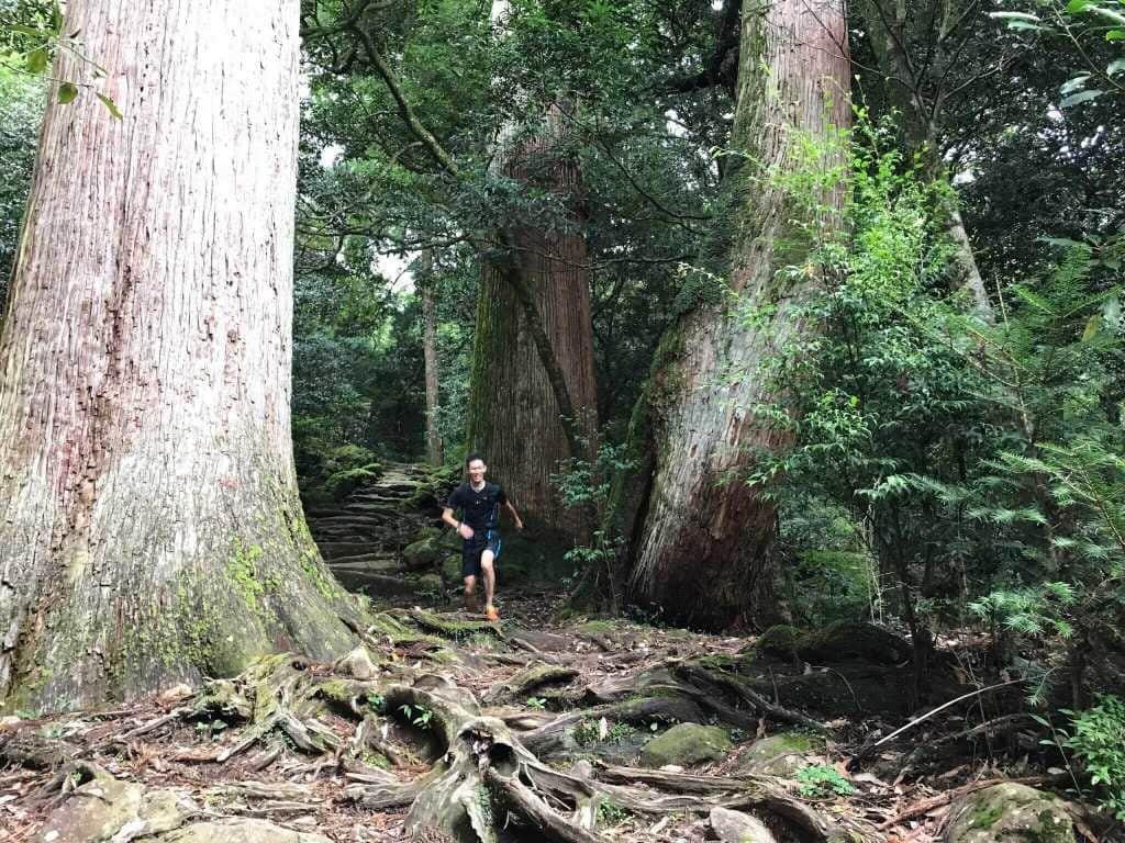 大会エントリーが11/14まで!! 巨大な1000年杉並木を満喫できるトレランレース「Mizukami Mountain Party』