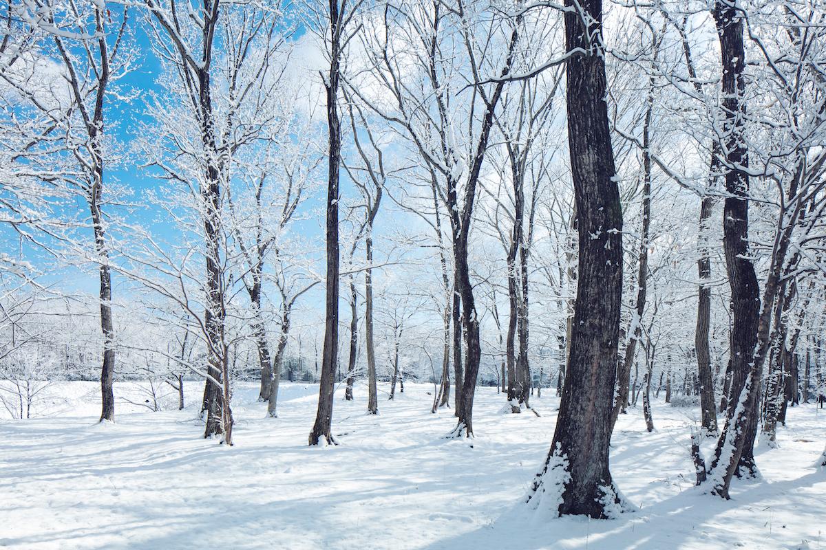 冬休みはスノーブーツでお出かけ!親子で行きたい2019年冬のレジャー&いま話題のスポット5選
